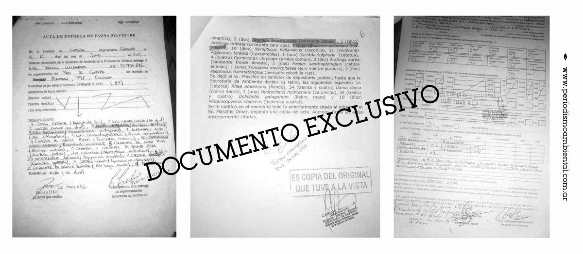 Actas oficiales de la Secretaría de Ambiente cordobesa donde consta el número y especie de los ejemplares de fauna silvestre secuestrados